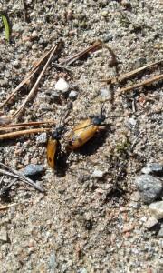 Bibaggar. Bild Bengt Hultin